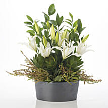 Harmonious Lilies: Funeral Flowers to New Zealand
