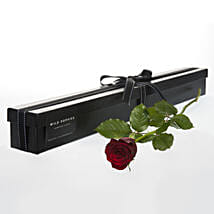 Single Stemmed Red Rose: Send Gifts to Hamilton