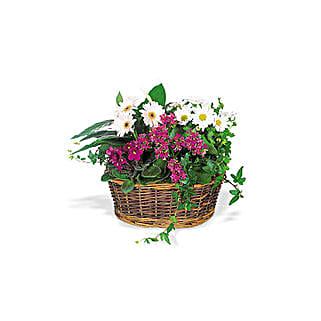 Send a Smile Flower Basket: Birthday Flowers to Qatar