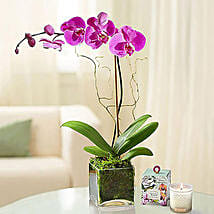 Purple Orchid Plant In Glass Vase: Plants to Singapore
