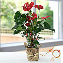 Red Anthurium Jute Wrapped Potted Plant With Rakhi: Rakhi Gifts for Brother to Singapore