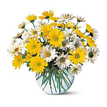 Dashing Daisies: Same Day Flowers for Wife in UAE