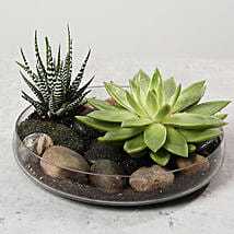 Green Echeveria and Haworthia with Natural Stones: Plants in UAE