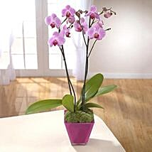 Elegant Beauty Plant: Plant Delivery in UK