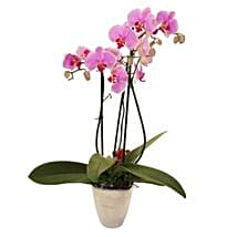 Elegant Orchid: Birthday Bouquet to UK