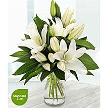 Pure White Lilies: