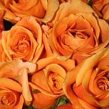 50 Long Stem Orange Roses: Send Flowers to Ontario