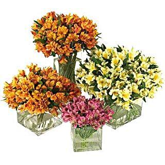 50 Peruvian Lilies: Send House Warming Flowers to USA