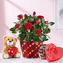 Heartfelt Love Rose Plant With Teddy: Valentine's Day Gifts to Jersey