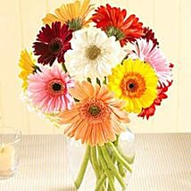 Multi Color Gerberas in Vase: Flower Delivery in Houston