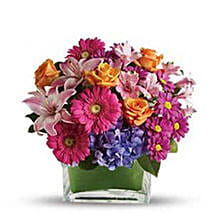 Rainbow Dream: Send Flowers to Ontario