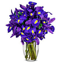 Stunning Blue Iris 10 Stems: Father's Day